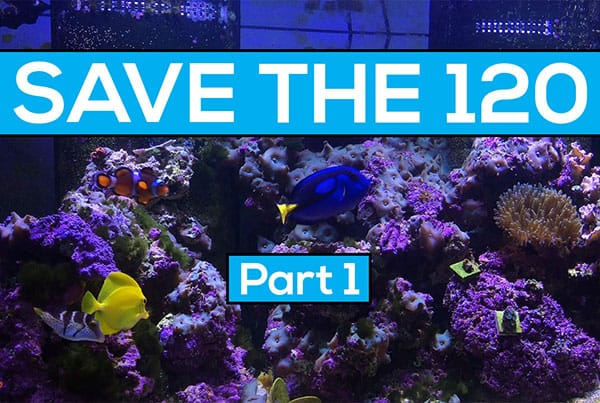 Save The 120 Part 1 : Vibrant Reef Cleaner to the rescue?